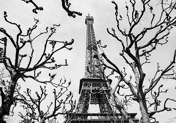 torre.tico